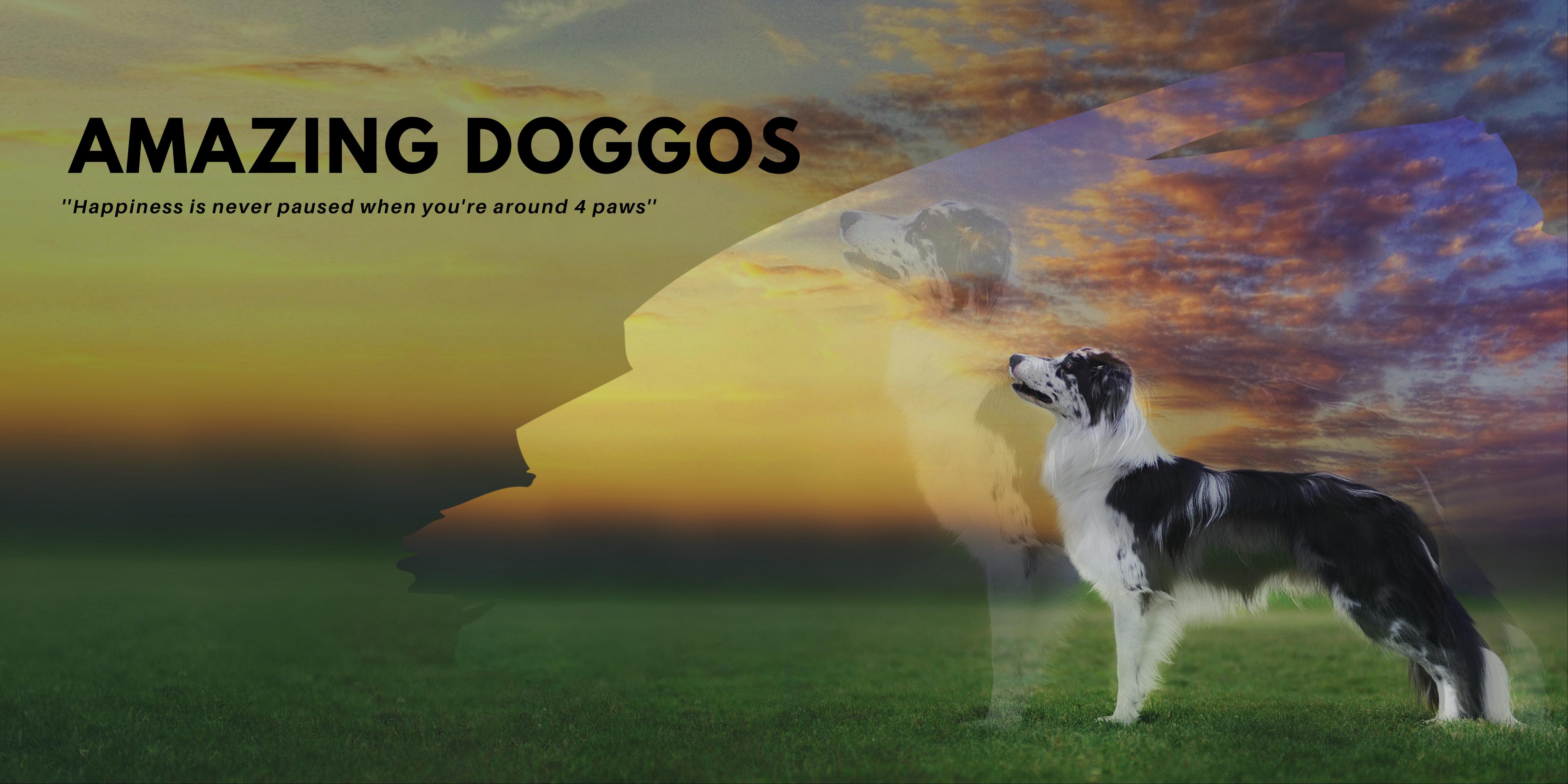 Amazing Doggos Image