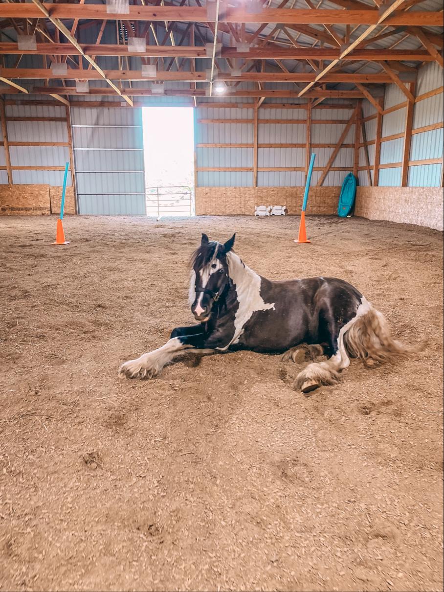 Horses 🐴  Image