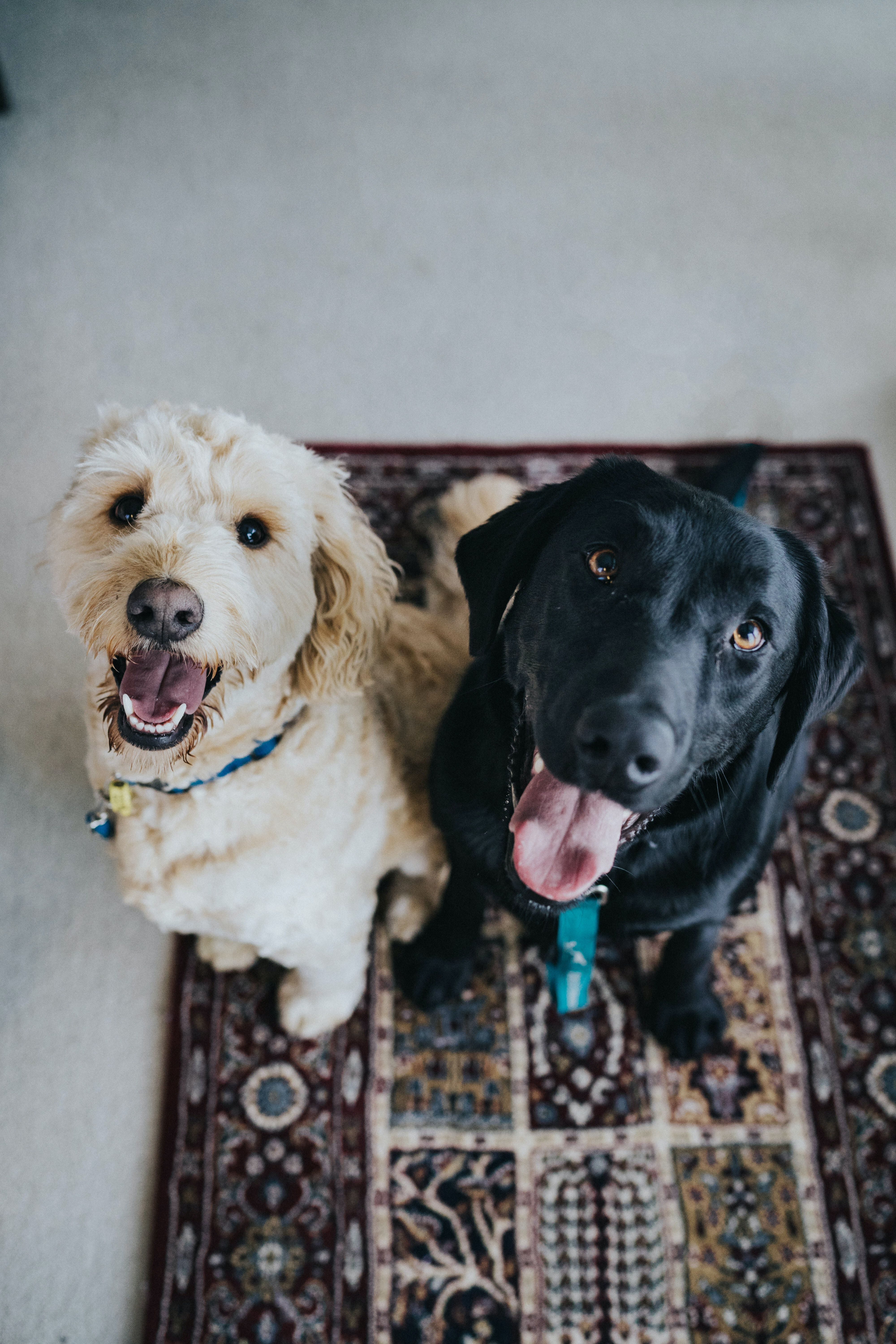 Dogs of Bunches Image