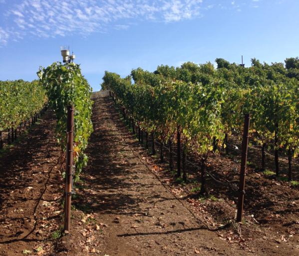 The Wine Aisle Image